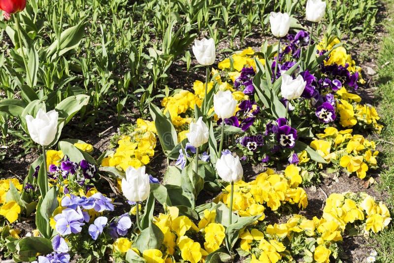 Gardin ha fiorito con differenti fiori colorati fotografie stock