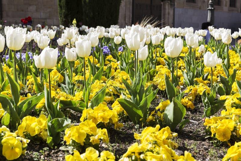 Gardin ha fiorito con differenti fiori colorati immagini stock