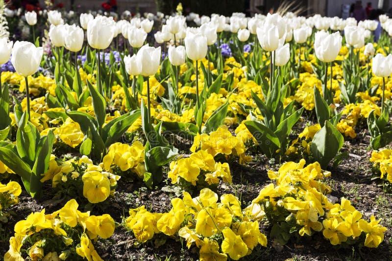 Gardin ha fiorito con differenti fiori colorati fotografia stock