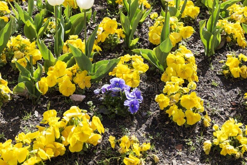 Gardin ha fiorito con differenti fiori colorati immagini stock libere da diritti