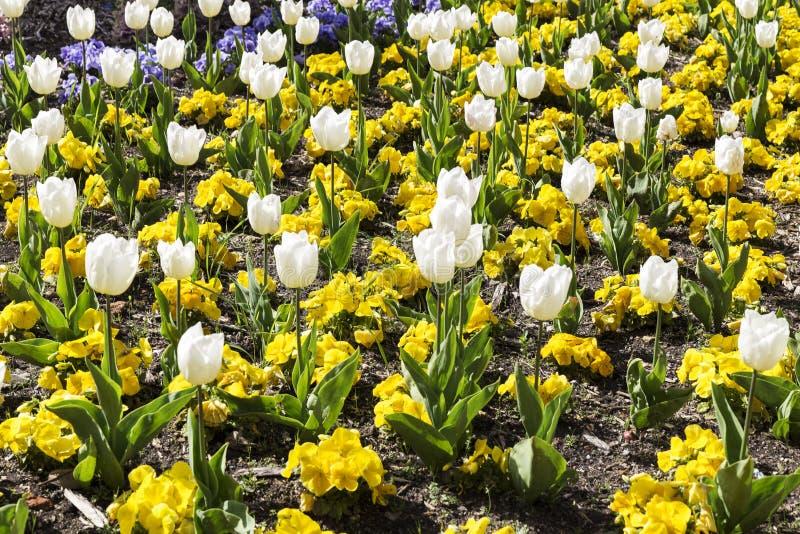 Gardin ha fiorito con differenti fiori colorati fotografia stock libera da diritti