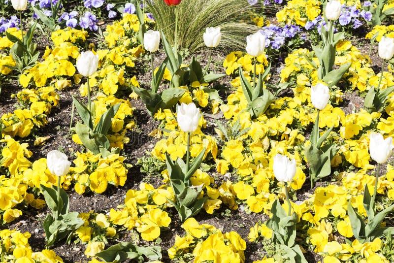 Gardin ha fiorito con differenti fiori colorati immagine stock libera da diritti