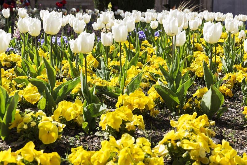 Gardin ha fiorito con differenti fiori colorati immagine stock