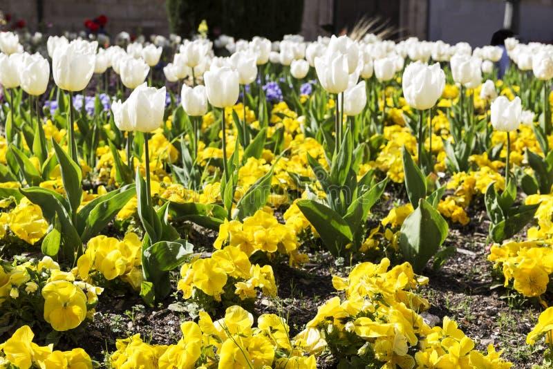 Gardin ha fiorito con differenti fiori colorati fotografie stock libere da diritti