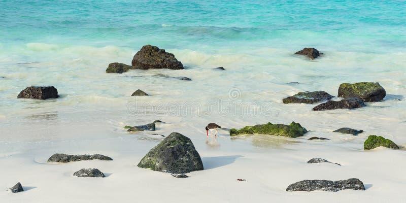 Gardner Bay Beach, Galapagos, Equateur image libre de droits