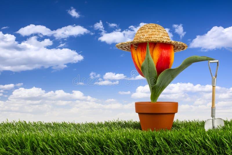 Gardner da tulipa imagens de stock