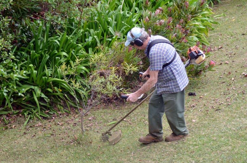 Gardner fauchant l'herbe photo stock