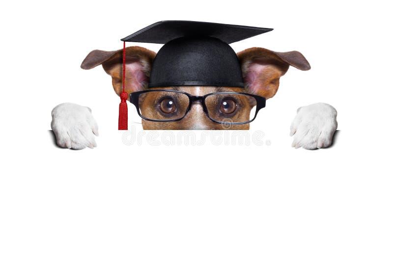 Garduate-Hund stockbild