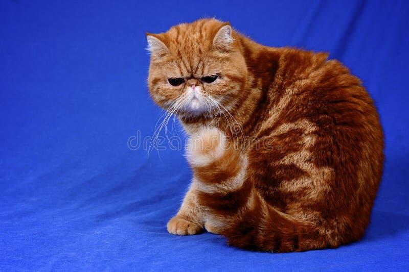 Garfield royalty free stock photography