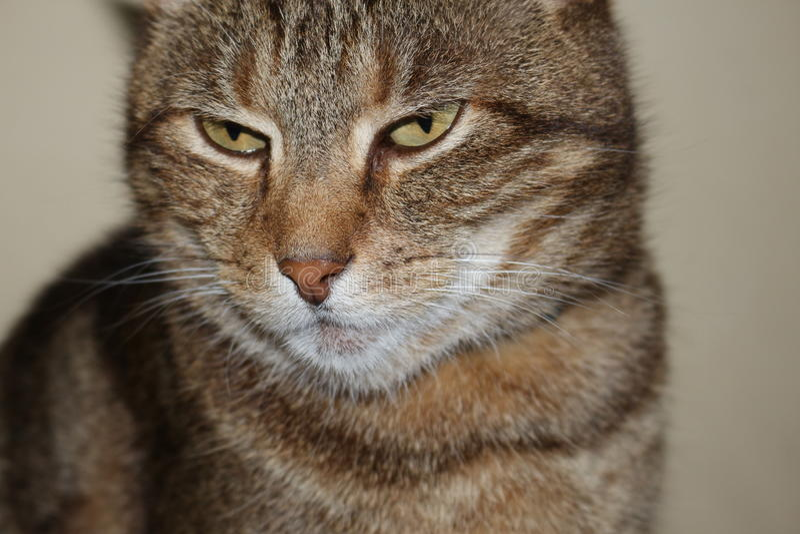 Garfield Face fotografia stock
