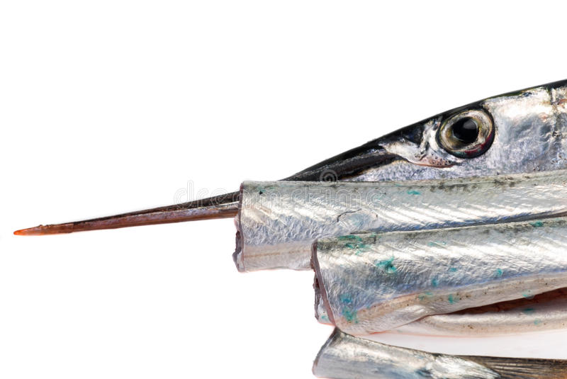 Download The Garfish stock photo. Image of cooking, food, interesting - 24863216