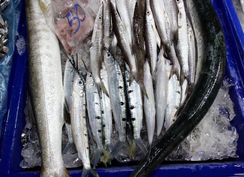 Garfish fish sold in fresh market royalty free stock images