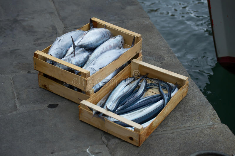 Garfish and skipjack. Fresh fish ready for sale stock photos
