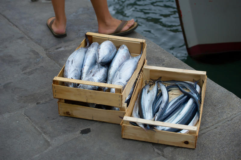 Garfish and skipjack. Fresh fish ready for sale stock image