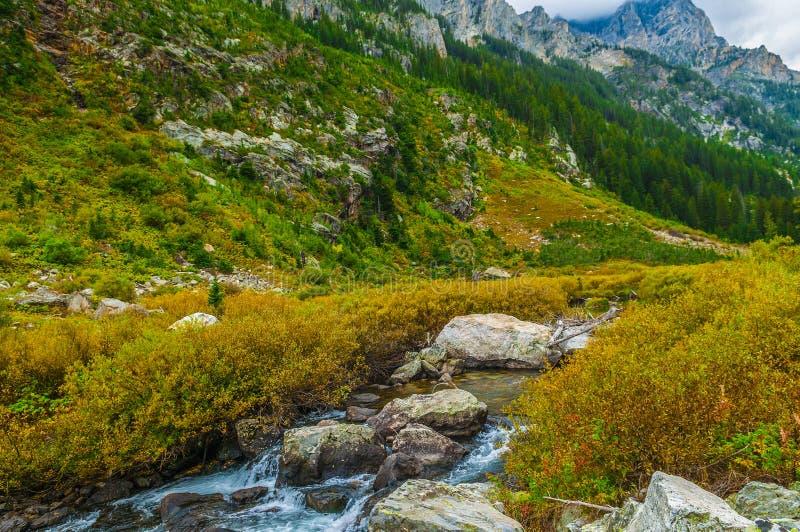 Garganta da cascata - parque nacional grande de Teton foto de stock royalty free