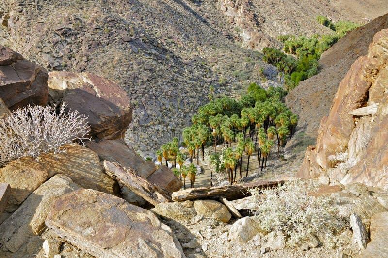 Garganta da palma, Palm Springs fotografia de stock royalty free