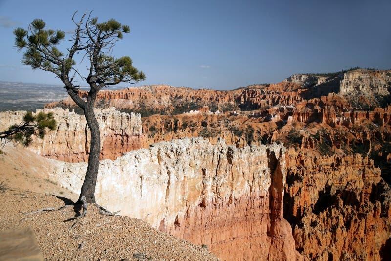 Garganta de Bryce, Utá, EUA fotografia de stock
