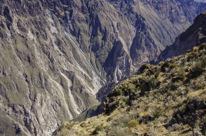 Garganta de Colca perto do ponto de vista de Cruz Del Condor Região de Arequipa, Pe fotos de stock