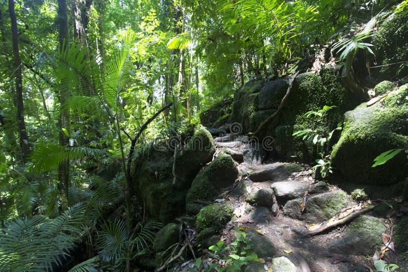 Garganta de Mossman de la selva tropical imágenes de archivo libres de regalías