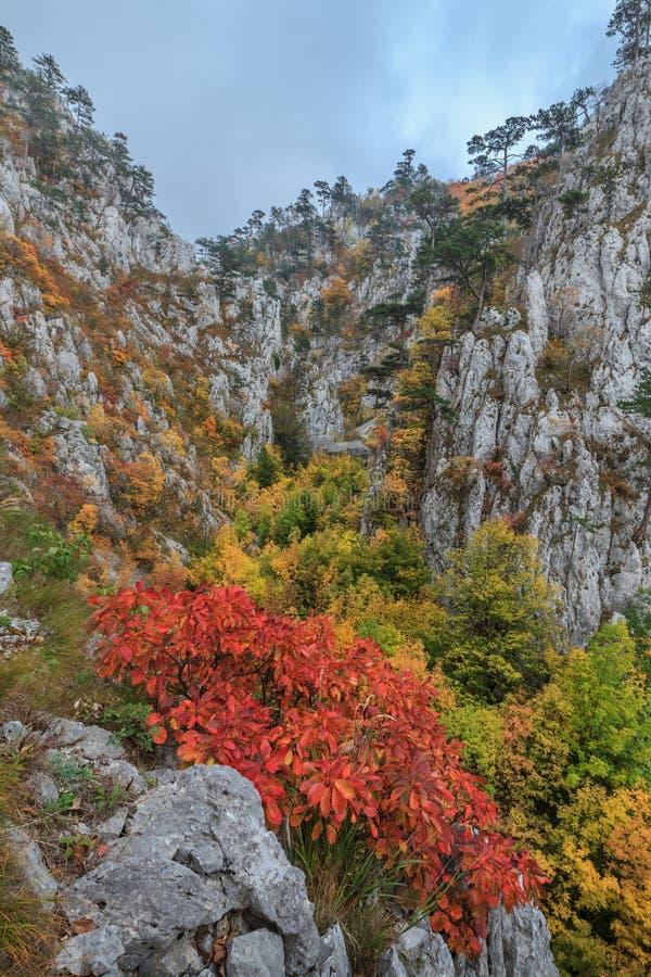Download Garganta De Tasnei, Rumania Imagen de archivo - Imagen de otoño, árbol: 41907147