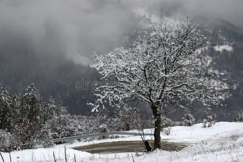 Garganta del río de Iskar, cerca de Svoge, Bulgaria - imagen del invierno imagen de archivo libre de regalías