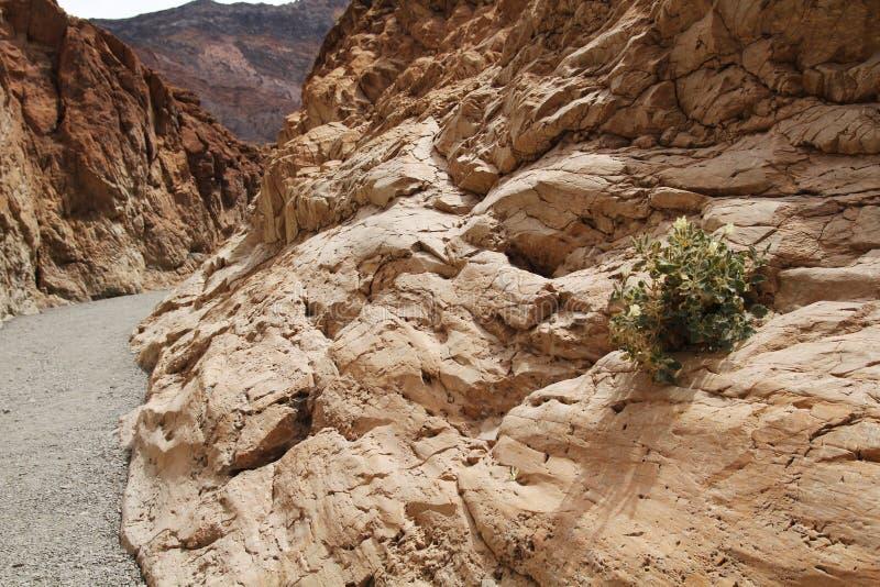 Garganta do mosaico, o Vale da Morte fotografia de stock