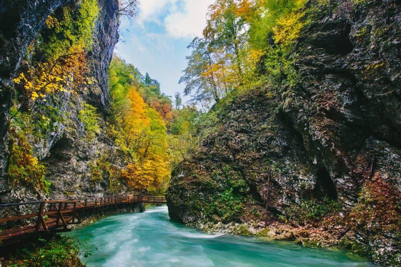 A garganta famosa com as pancadinhas de madeira, sangradas, Triglav do desfiladeiro de Vintgar, Eslovênia, Europa imagem de stock royalty free