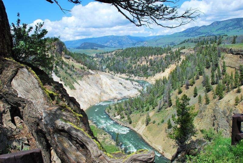 Garganta grande de Yellowstone fotografia de stock