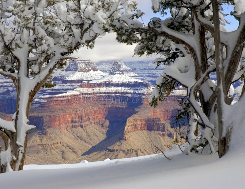 Garganta grande no inverno 4 fotografia de stock royalty free