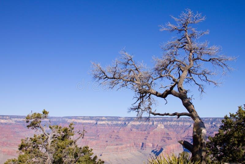 Garganta grande o Arizona imagem de stock