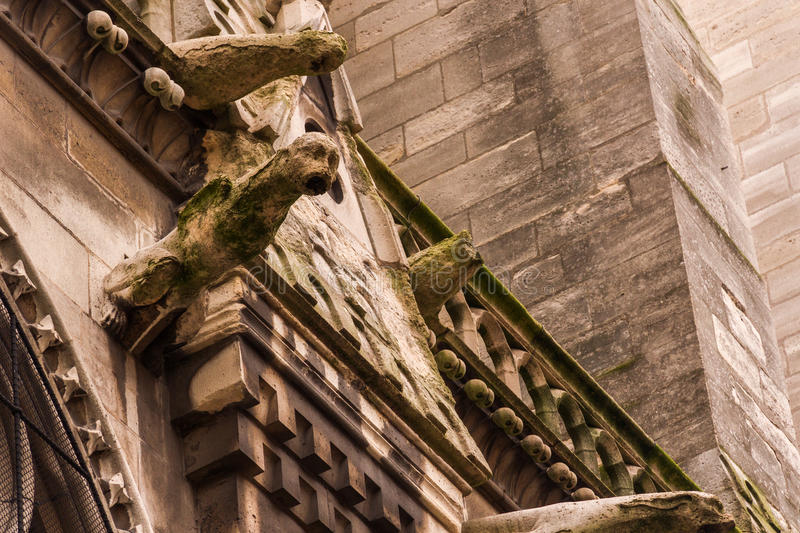 Gargouille Monster Notre Dame. Ancient gothic architecture detail: gargouille monster on the wall of Notre Dame de Paris Cathedral in Paris, France which is royalty free stock image