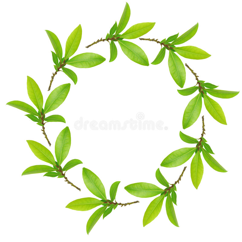 Download Garland of Bay Leaves stock photo. Image of cooking, herbs - 7327840