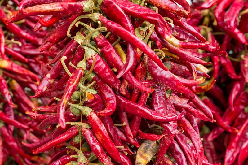 Garland chili pepper group of sharp pods vertical row culinary background close-up stock photos