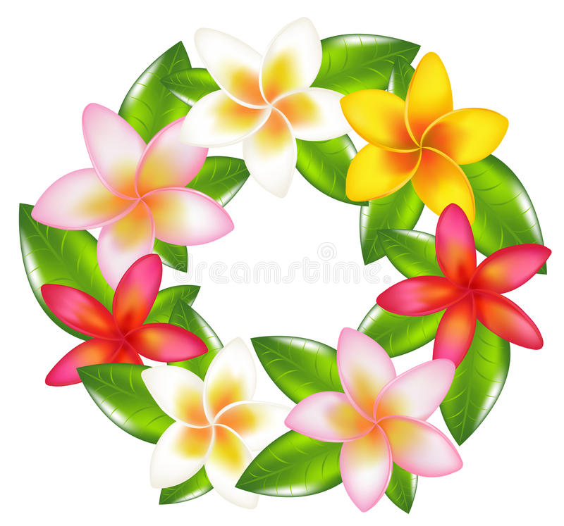 Garland Of Fragipani. Vector royalty free illustration