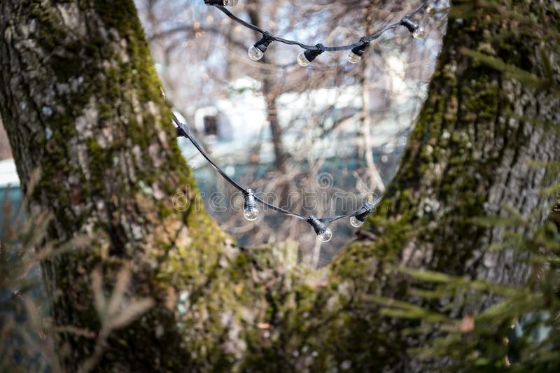 Garland of lamps on a tree from afar stock photography