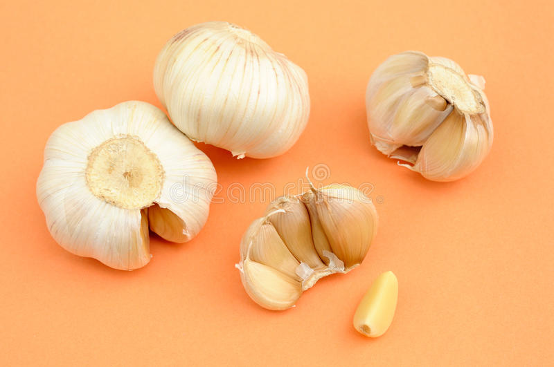 Garlic. Bulb of garlic and bulb divided into numerous fleshy sections royalty free stock photos