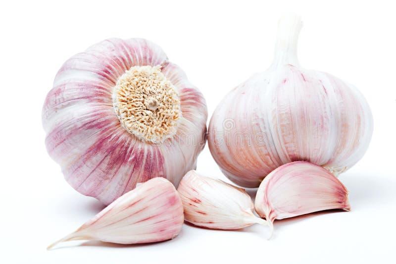 Garlic stock photography