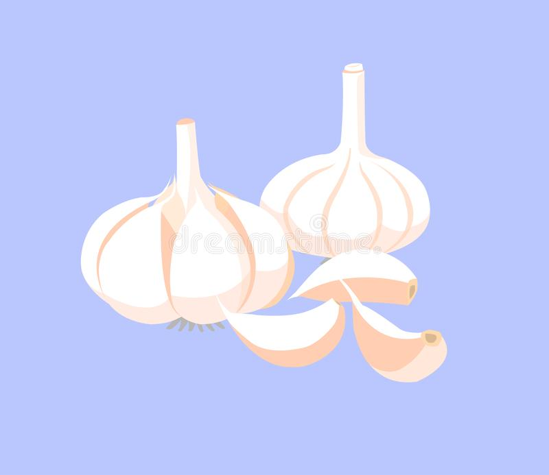 Garlic and garlic cloves isolated on blue background. Garlic on blue background stock illustration