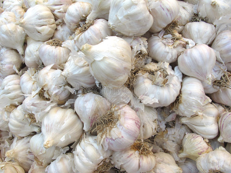Garlic. Heap of dried garlic buds for sale in vegetable market stock image
