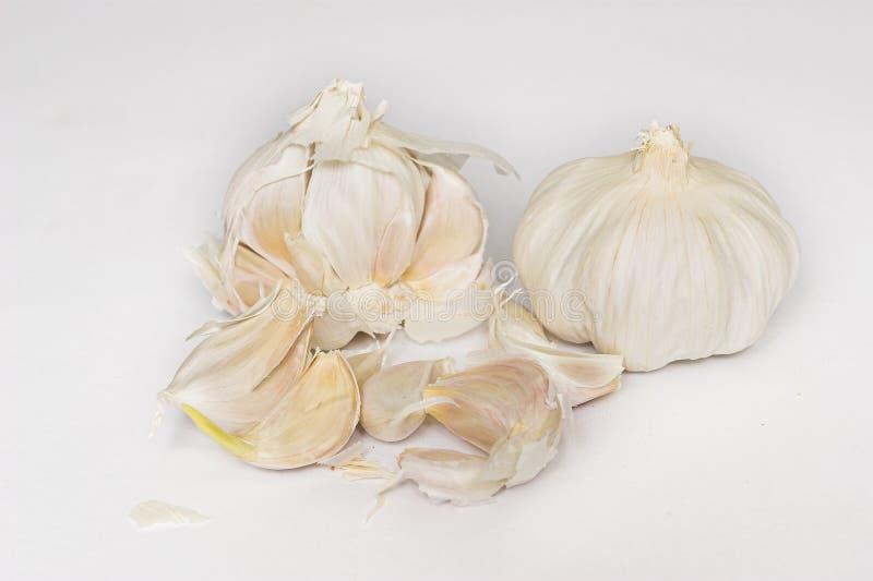 Garlic #2 royalty free stock photos