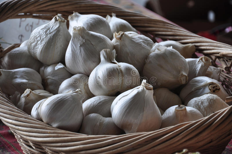 Download Garlic stock image. Image of bell, grocery, condiments - 20305723