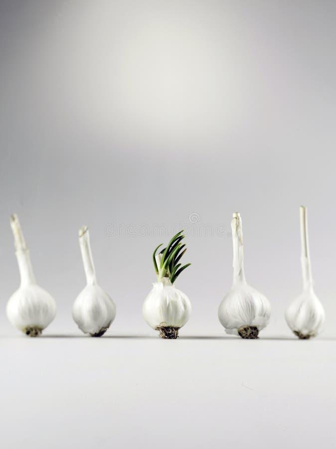 Download Garlic Royalty Free Stock Photos - Image: 23969638