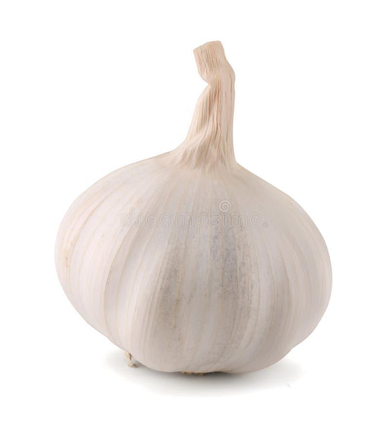 Free Garlic Royalty Free Stock Image - 26512236