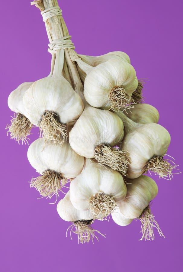 Download Garlic stock photo. Image of sativum, grow, garlic, vegetable - 26760230