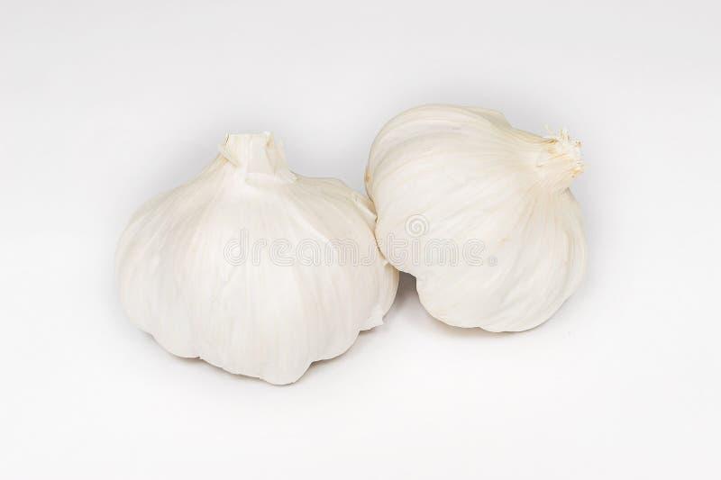 Garlic #3 stock photography