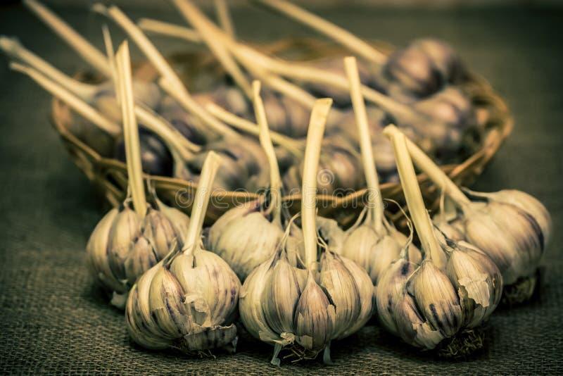 garlic foto de stock royalty free