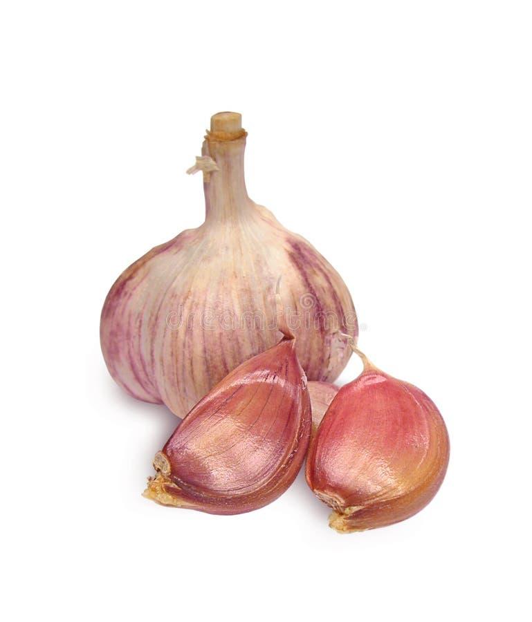 Download Garlic stock image. Image of bulbs, purple, smell, health - 6453189