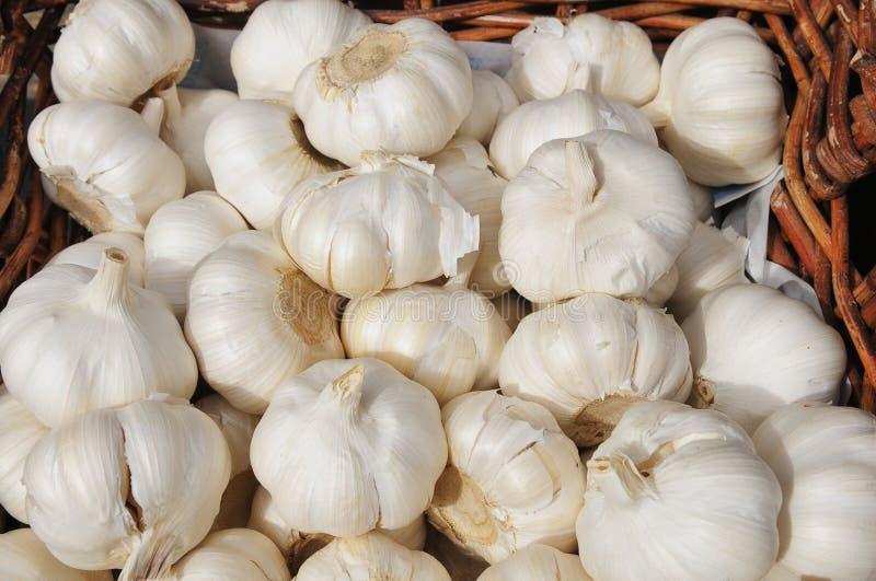 Garlic in a basket royalty free stock photos
