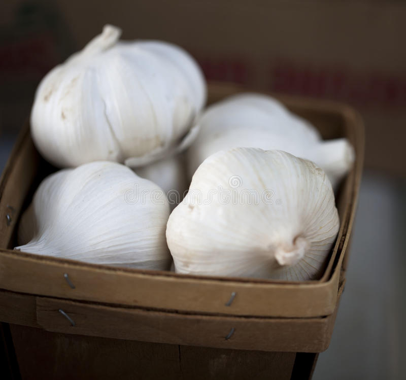 Garlic in a basket royalty free stock photography