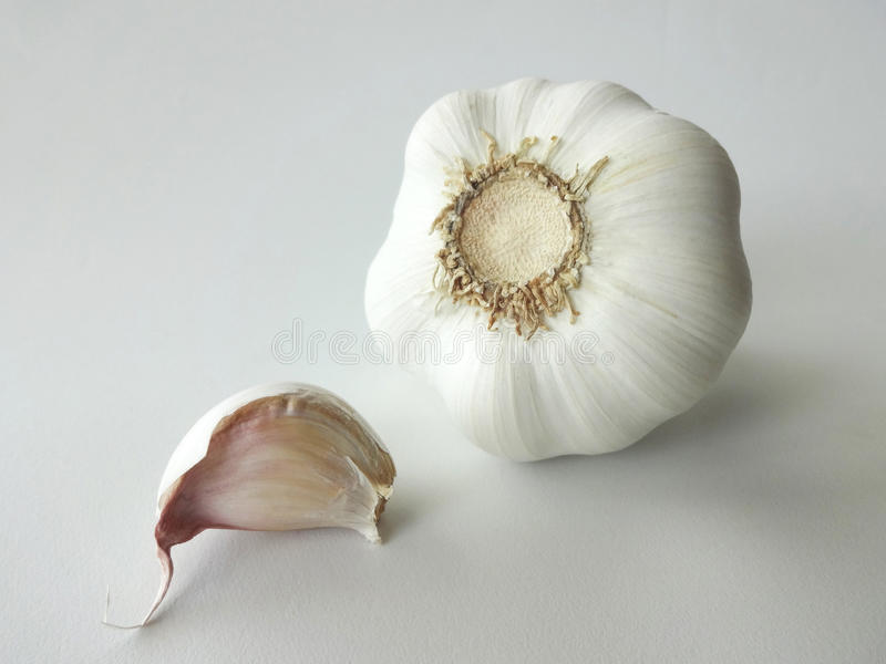 Garlic Bulb and Clove Against White Background. Garlic Bulb and Clove Isolated Against White Background stock photos